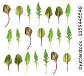pattern from chard  and arugula ... | Shutterstock . vector #1159445548