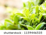 green leaf nature for natural... | Shutterstock . vector #1159446535