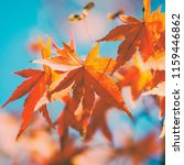 closeup autumn maple tree... | Shutterstock . vector #1159446862