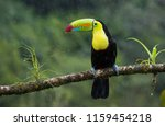a colorful keel billed toucan... | Shutterstock . vector #1159454218