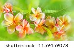 panorama of blossoming ... | Shutterstock . vector #1159459078