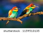colored birds in the sun's... | Shutterstock . vector #1159513135