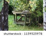Small photo of old, forgotten wooden table in the summer at the bush; On the table there is a deer hat and fishing tackle, grill accessories under the table