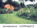 flowers used for decorating the ... | Shutterstock . vector #1159546672
