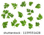 green leaves of parsley... | Shutterstock . vector #1159551628