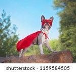 Stock photo cute french bulldog in a super hero costume 1159584505