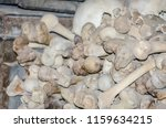 kalambaka  greece   june 10 ... | Shutterstock . vector #1159634215