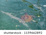 sea pollution and turtle  ... | Shutterstock . vector #1159662892