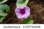 purple flower and green leaf | Shutterstock . vector #1159732648
