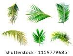 coconut palm leave leave set...   Shutterstock . vector #1159779685