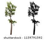 Tree White Background Tree Silhouette - Fine Art prints