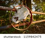 Cattle Skull And Wagon Wheel...
