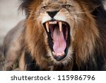Angry Roaring Lion  Kruger...