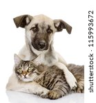 The Dog Hugs A Cat. Isolated O...