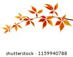 branch of colorful autumn... | Shutterstock . vector #1159940788