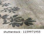 shadow  tree  on  the  corridor. | Shutterstock . vector #1159971955