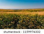 spring yellow daisy flowers and ... | Shutterstock . vector #1159976332