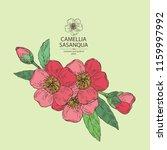 camellia sasanqua  camellia... | Shutterstock .eps vector #1159997992