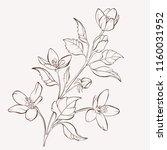 blossoming vector flowers on... | Shutterstock .eps vector #1160031952