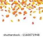 oak  maple  wild ash rowan... | Shutterstock .eps vector #1160071948