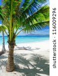 green tree on a white sand... | Shutterstock . vector #116009296
