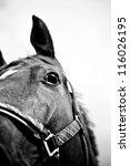 Horse Head Close Up