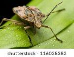 mating beetles | Shutterstock . vector #116028382