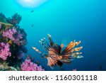 colorful lionfish patrolling a... | Shutterstock . vector #1160301118