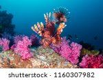 colorful lionfish patrolling a... | Shutterstock . vector #1160307982