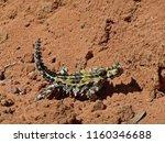 australian thorny devil lizard | Shutterstock . vector #1160346688