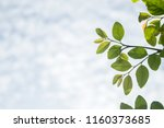 view natural foliage. blur the... | Shutterstock . vector #1160373685