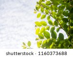 view natural foliage. sky... | Shutterstock . vector #1160373688
