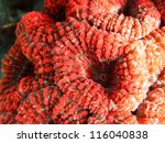 Spiny  Large  Flower Coral ...