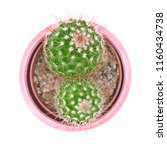 top view closeup green cactus... | Shutterstock . vector #1160434738