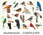 various cartoon birds... | Shutterstock .eps vector #1160511355