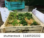 plants in a white wooden box ... | Shutterstock . vector #1160520232