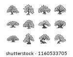 huge and sacred oak tree plant... | Shutterstock .eps vector #1160533705