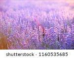 lavender field aerial view.... | Shutterstock . vector #1160535685