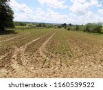 soybean on the field  | Shutterstock . vector #1160539522