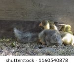 small cute geese | Shutterstock . vector #1160540878