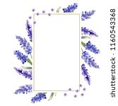 watercolor purple lavender... | Shutterstock . vector #1160543368