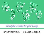 rustic decorative plants... | Shutterstock .eps vector #1160585815