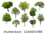 collection of isolated trees on ... | Shutterstock . vector #1160651488