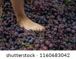 people treading grapes to make... | Shutterstock . vector #1160683042