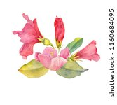 watercolor drawing floral...   Shutterstock . vector #1160684095
