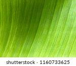banana leaf background texture... | Shutterstock . vector #1160733625