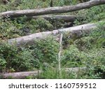 snag and fallen trees in the... | Shutterstock . vector #1160759512