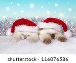 Little Cats Wearing Santa's Ha...