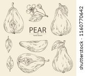 collection of pear  fruit ... | Shutterstock .eps vector #1160770642
