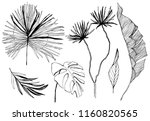 tropical leaves illustration.... | Shutterstock .eps vector #1160820565